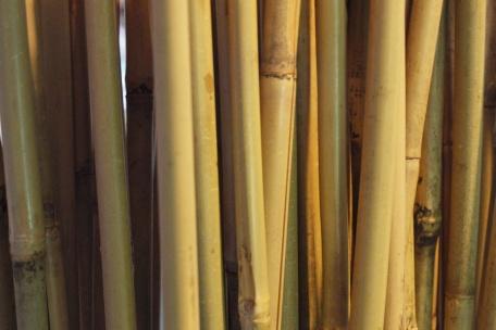 Bamboestiek
