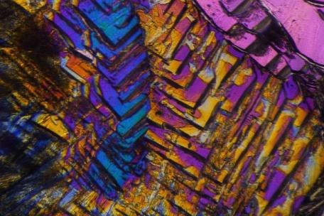 microscoopFOTO_600_bij_400_ROSE.jpg